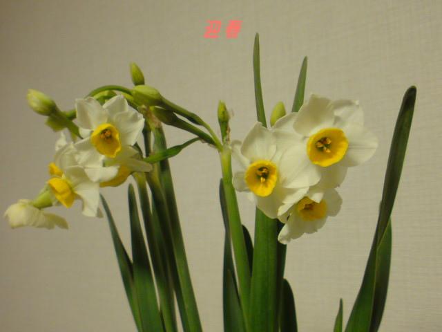 迎春・2012